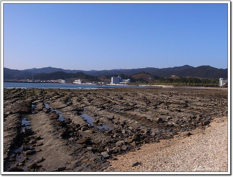 青島海岸 (18)