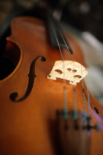 Viola by ccho, on Flickr