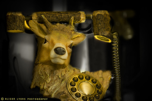 Telephone Deer? by alison lyons photography