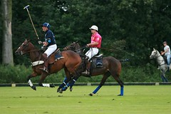 IMG_3952.jpg (7scout7) Tags: horses game holland field ball europe belgium tournament pony ponies wraps mallet polo saddle bridel gallp