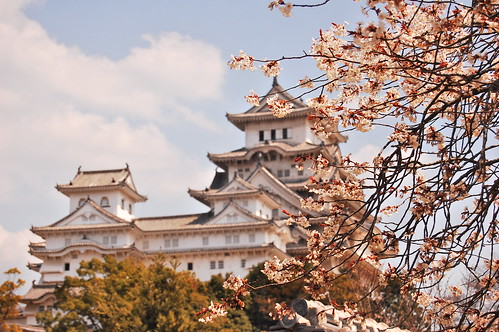 Cherry blossom at the Himeji Castle