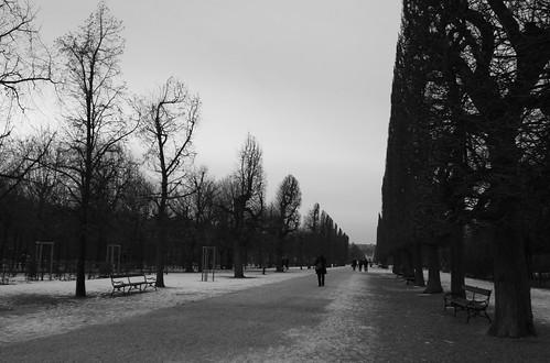 王宮の並木道