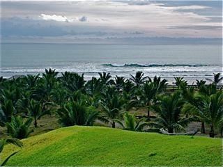 Ecuador-coastal-palms
