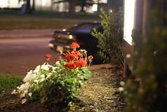 City flowers (Lee James) Tags: nc 50mmf17 downtownraleigh sonya100
