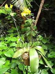 AWITP_June7_08_26.jpg (Adrian J.K. Shum, CGD) Tags: nature winnipeg florafauna muhsashumblogspotcom
