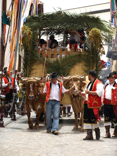 Oxen pull carts through the streets