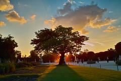 Jardin des Tuileries - Paris (Auré from Paris) Tags: sunset sky sunlight paris france tree skyline clouds garden landscape colorful louvre jardin concorde tuileries nuages parc soe contrejour blueribbonwinner auré mywinners abigfave anawesomeshot diamondclassphotographer flickrdiamond sigmadp1