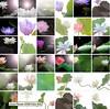 Lotus Flower Fine Art Collection by Bahman Farzad Fine Art Lotus