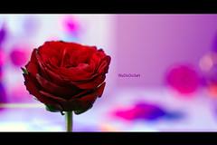 (Weda3eah*) Tags: red flower green love by office background stuff luv lovely qatar soooo pinkesh weda3eah wadooo3ah goldenvisions