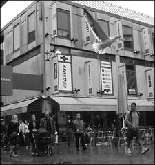 Seagull in town (sebilden) Tags: street city people urban bw white black digital photoshop gteborg photo sweden candid gothenburg streetphoto sverige blacknwhite enhanced vitt svart svartvit svartvitt sebilden