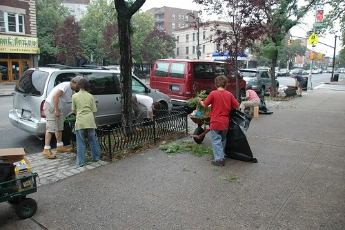 Before: Weeding Cortelyou
