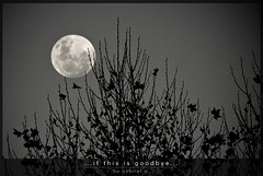 My famous last words could never tell the story... (GP-SNAPS) Tags: bw moon white black tree blanco last canon hojas arbol mood sad negro luna triste goodbye ultimas melancholic ambiente adios markknopfler aplusphoto malancolia