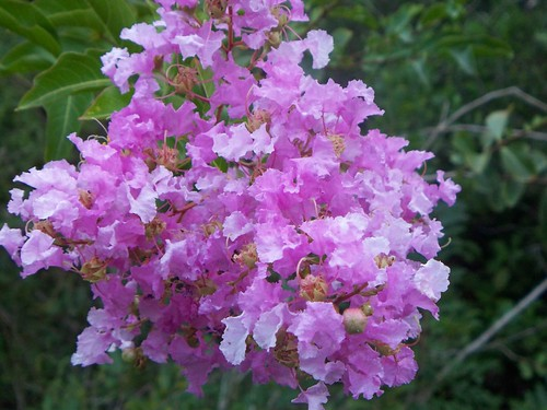 Bonita springs flower