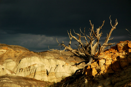 Twisted Tree in the Badlands