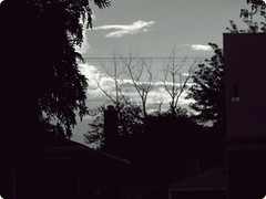 Waiting to Die (gabreela) Tags: trees houses tree shadows rooftops silhouettes neighborhood powerlines chimneys garages detroitmichigan clearskies cityblock