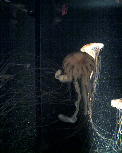 Jellies - New England Aquarium, Boston, MA
