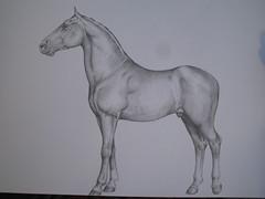 horse in pencil (Marc Stroucken) Tags: horse art pencil drawing marc paard tekening potlood stroucken