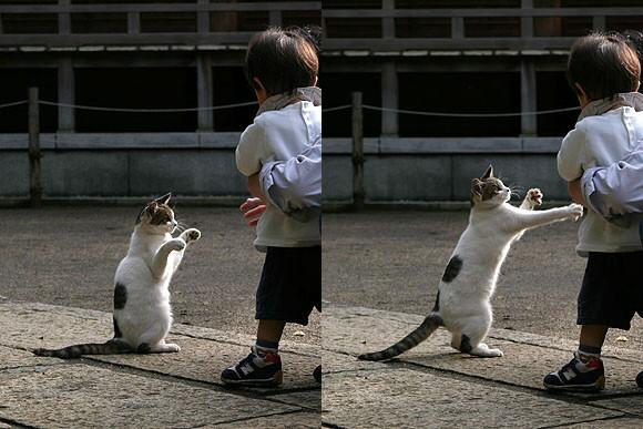 貓咪百裂拳-1