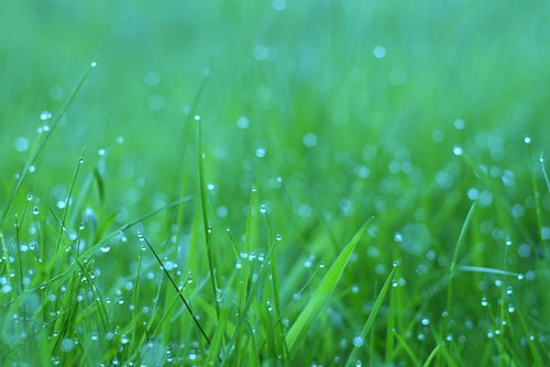 dew drop shimmer...