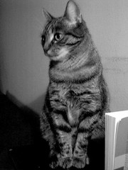 Salome (- Caillean -) Tags: cats sally salome shekitty