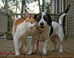 Puppy Love (Boered) Tags: dog love cat porch darla specter abigfave thelittledoglaughed 8prettykittycommentspartii 5prettykittycommentspartiii