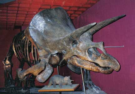 Old Photo Blowout: Old Triceratops Display at the Museum of Science
