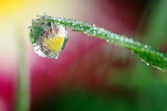 Another cold start this morning #3 (Lord V) Tags: macro ice water dewdrop refraction