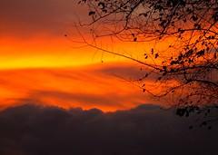 De regreso al nido (hiskinho) Tags: sunset sky cloud atardecer fire sombra ciel rbol silueta fuego nuage texturas nube supershot mywinners ultimateshot flickrclassique