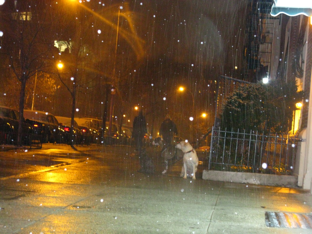 1st Bklyn Snow 08/09 season