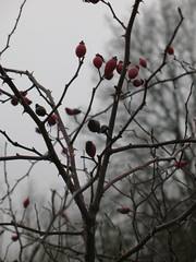 re d (petitewebfleur) Tags: hiver arbre brouillard essonne valléedelajuine saintcyrlarivière