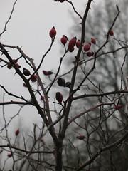 re d (petitewebfleur) Tags: hiver arbre brouillard essonne valledelajuine saintcyrlarivire