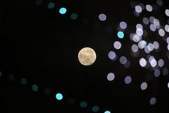 Full moon in Tokyo