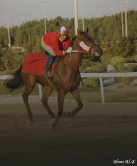 Run Run Run you are the winner !!! (Nouf Alkhamees) Tags: red horse brown sport canon run kuwait alk nono  alkuwait    noof  nouf
