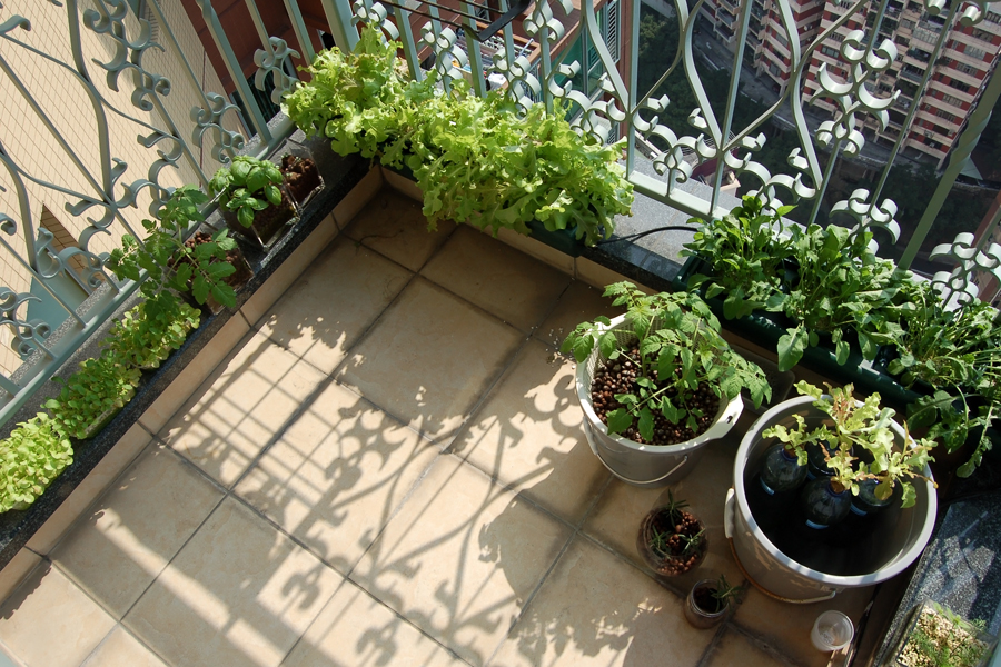 urban farming and gardening tips for small spaces