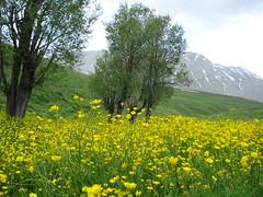 Dashte Gole Zard (Iraniann) Tags: iran beloved