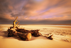 Driftwood, Alnmouth Beach, Northumberland (Corica) Tags: uk longexposure greatbritain england seascape beach landscape log britain northumberland driftwood alnmouth trunk corica