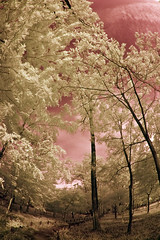 Path in Koma Park (aeschylus18917) Tags: park red sky tree japan landscape ir tokyo nikon scenery d70 nikond70 surreal infrared  saitama infra hanno edit saitamaken koma 105mm  105mmf28gfisheye   kinchakuda specnature saitamaprefecture nikkor105mmf28gfisheye   danielruyle aeschylus18917 danruyle druyle    hann hannshi kichakudapark kinchakudapark