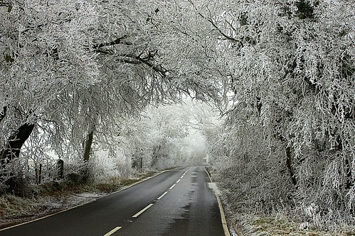 It Was Not Always Sunshine In Somerset - Iced Trees :-)