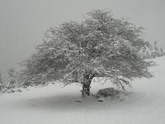 Árbol #Photography #Flickr #Foto (Jose Asensio Larrinaga (Larri) Larri1276) Tags: rutaaelorritxugane nieve orozko bizkaia eh basquecountry árbol