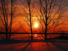 Sunset Through Trees (Billy Wilson Photography) Tags: winter sunset sun snow ontario canada cold color colour ice nature water beautiful beauty canon river landscape colorful great january sunsets powershot colourful saultstemarie northernontario algoma goldenglobe sx110 s