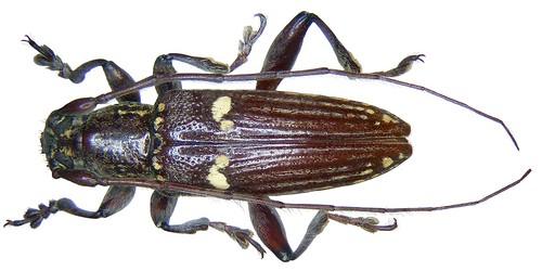 Papua New Guinea_24