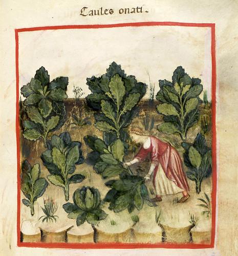 021- El repollo-TACUINUM SANITATIS- Biblioteca Casanetense Ms. 4182