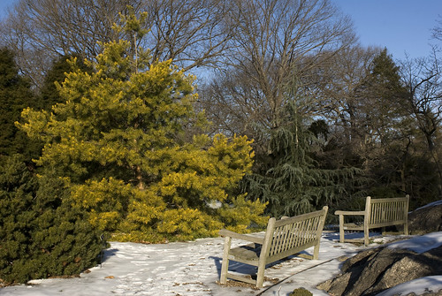 Benenson Conifer Benches