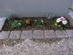 門袖壁前の花