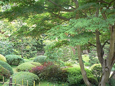 arbres jardin Kahn.jpg
