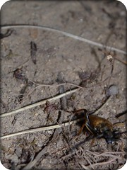 Walking Bug ~ playing card (Elsa Kurppa) Tags: bug insect 2009 picnik playingcard elsakurppa