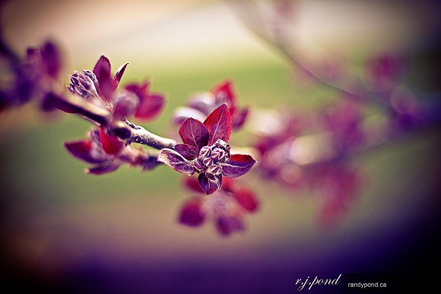 ~ 130/365 Spring Leaves ~