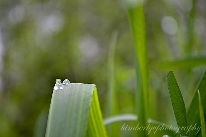 rain2-edit-clean