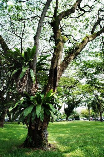 Tree, Old Kallang Airport driveway