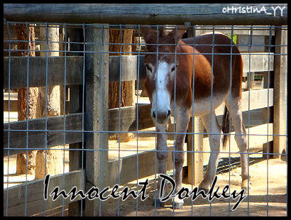 The Innocent Donkey